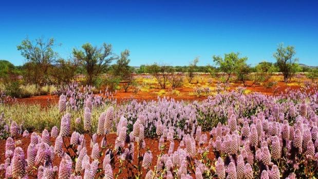 Dünyanın bahar renklerine bürünen çölleri
