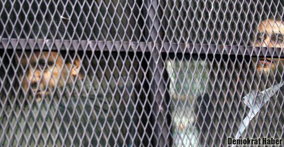 1067 avukat ilan verdi: Tutuklu avukatlar serbest bırakılsın