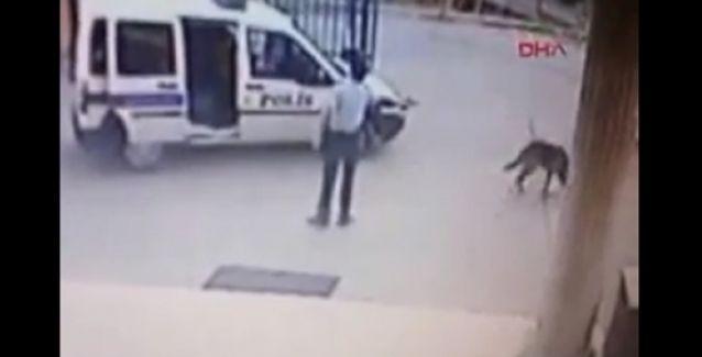 Polis, karakol bahçesinde köpeği hedef alarak vurdu, 'görmedim' dedi!