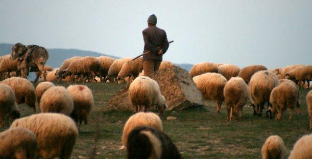 Dersim'de bir çoban uzun namlulu silahla vurularak öldürüldü