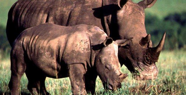 Hayvan hakları için 'Yaban Hayatı Adalet Komisyonu'