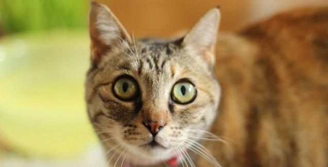 İspanya'da kedi ve köpekler, insanların sahip olduğu haklara kavuştu