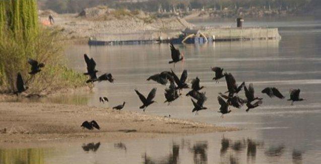 Kelaynak kuşları IŞİD işgalindeki Palmira'da mahsur kaldı!