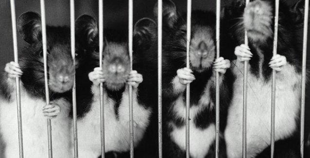 Kozmetikte hayvanların test amaçlı kullanımı yasaklandı