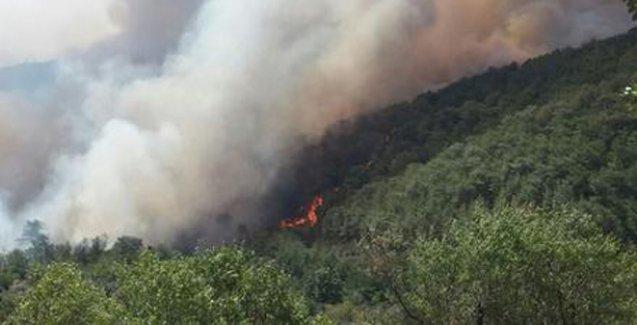 Mersin'de orman yangını: Bir mahalle tamamen boşaltıldı