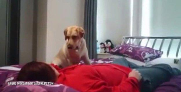 2 yaşındaki köpek Poppy, 'epilepsi hastalarına umut ışığı olabilir'