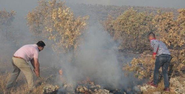 Dersim, Mardin ve Şırnak'taki orman yangını devam ediyor