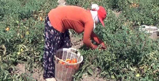 Konya'da Kürt tarım işçilerine ırkçı saldırı