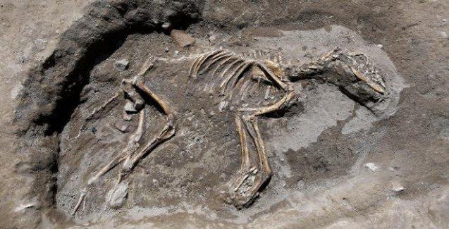 3 bin yıllık köpek iskeleti bulundu