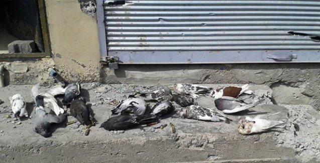 'Cizre'de hızlarını alamayıp sokaktaki kedileri, havadaki güvercinleri de vurmuşlar'