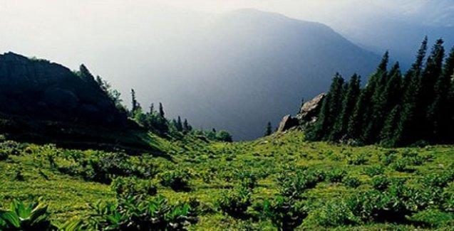 Danıştay Kaz Dağları'nda talana izin verdi