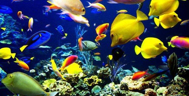 WWF: Deniz canlılarının yarısı son 40 yılda yok oldu