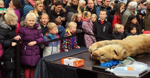 Bir aslanı çocukların önünde parçalarına ayırıp incelediler!