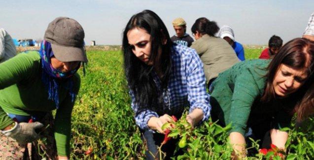 Figen Yüksekdağ tarım işçileriyle bir araya geldi