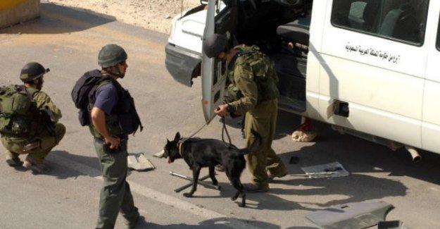 Hollanda, Filistinliler'e karşı saldırı için eğitilen köpeklerin satışına göz yumdu