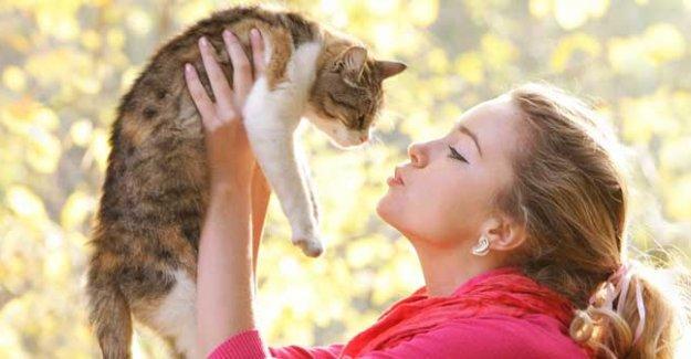 Kediler sahibinin duygularını hissediyor