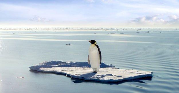 İklim Zirvesi: STK'lardan Türkiye heyetine şeffaflık çağrısı