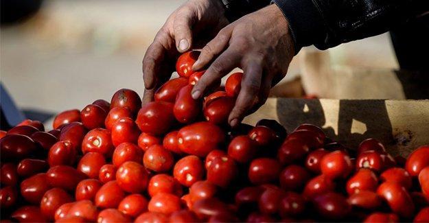 Meyve ihracatçıları Rusya'yı kaybetmek istemiyor