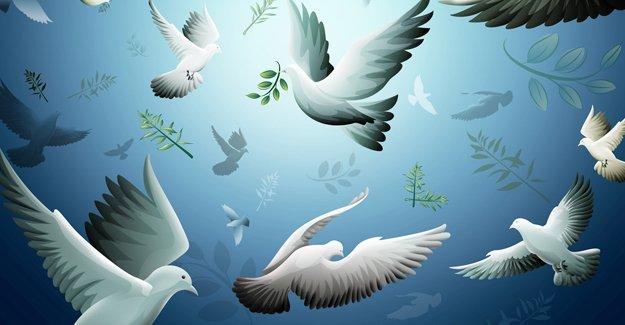 Bianet'ten 14 dilde 'barış' mesajı