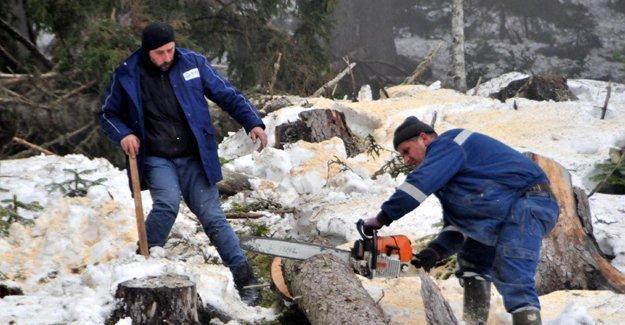 Orman Müdürlüğü'nden, Cerattepe'deki ağaç kesimine suç duyurusu