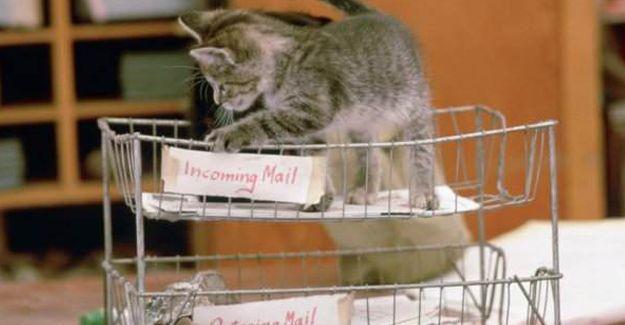 Postane kedilerinin tarihçesi