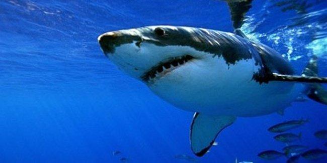Marmara'da dev köpek balığı bulundu