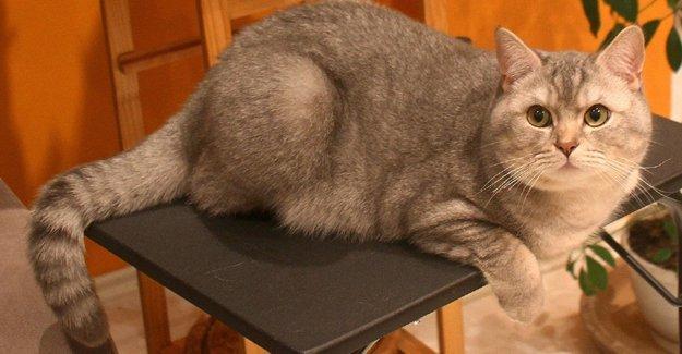 Kayıp kedi, polis bürosuna kendisi 'başvurdu'