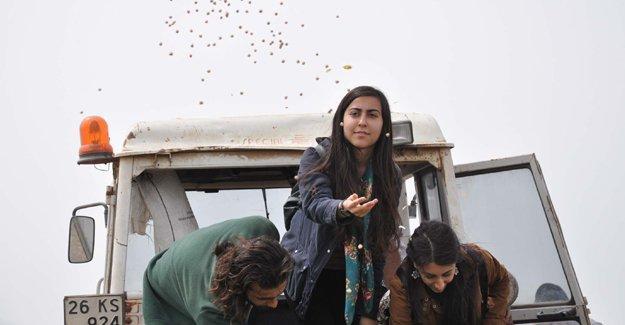 Komünist Başkan'ın gönderdiği nohutlar Eskişehir'de tarlalara ekildi