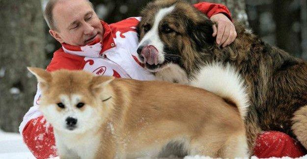 'Tehlikeli köpeklerin' kısa tarihi