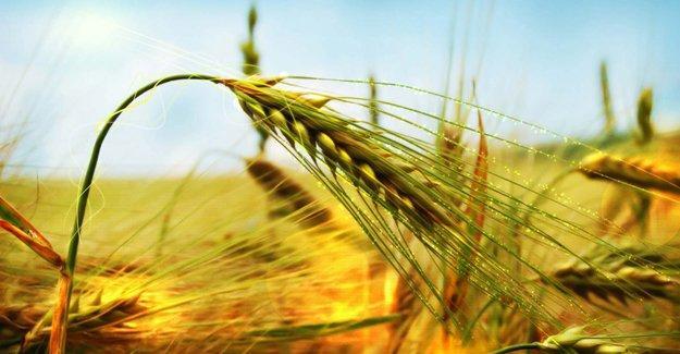 Tarım destekleri belli oldu