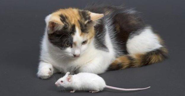 Hayvanlar intihar eder mi?