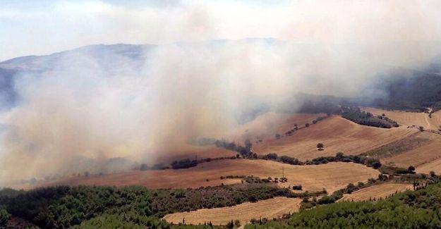 Çanakkale, İstanbul ve Diyarbakır'da orman yangınları