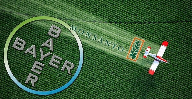"""""""Bayer'in GDO'lu tohum üreten Monsanto'yu almasının anlamı"""""""