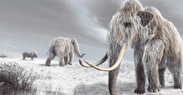 Buzul çağdaki mamutun soyu neden tükendi?