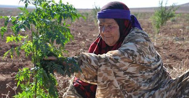 Rojava'da şiddete karşı 'kadın köyü'