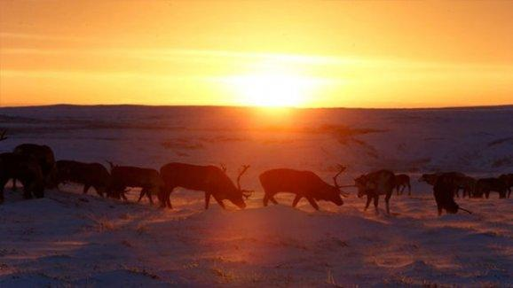 Kuzey kutbunda sıcak hava rekoru