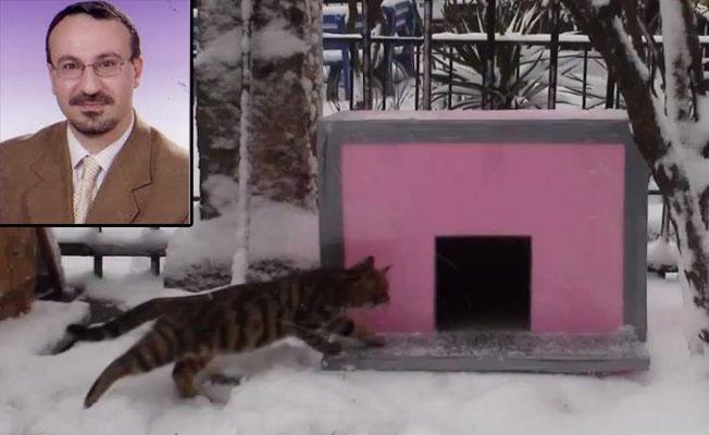 Kadıköy'de psikolog, kedi evi yüzünden öldürüldü