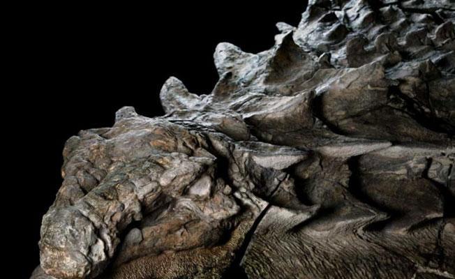 110 milyon yıllık 'uyuyan ejderha'