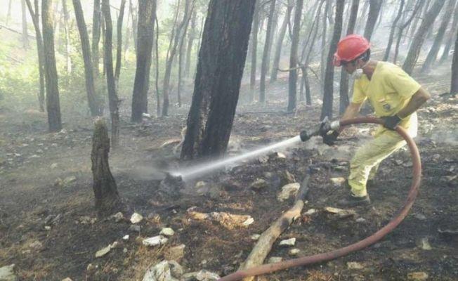 Kazdağları'ndaki ormanı yangını kundakçısı yakalandı