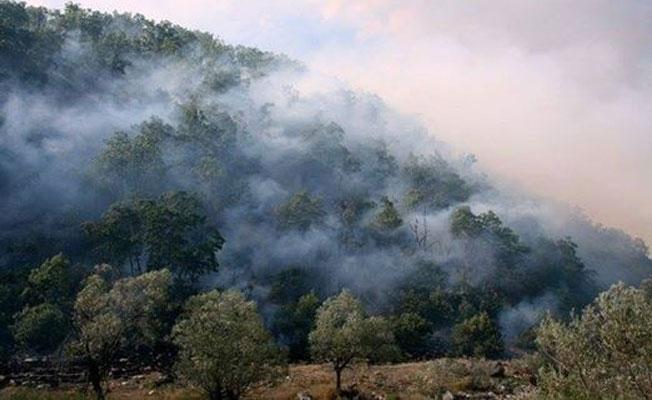 """""""Orman yangınlarıyla birlikte Dersim insansızlaştırılıyor"""""""