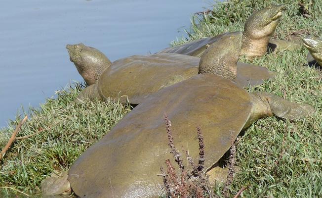 Diyarbakır'da kaplumbağalarla gömülmüş 2500 yıllık kadın ve çocuk bulundu