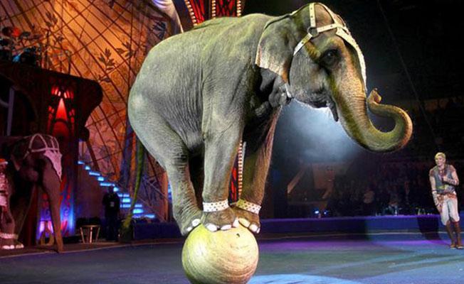 İrlanda vahşi hayvan sirklerini yasakladı