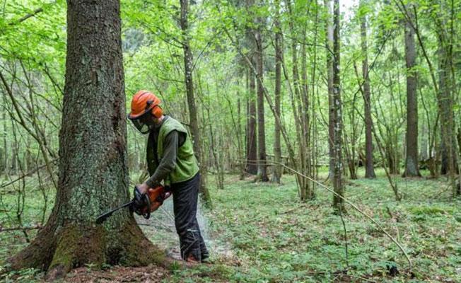 Polonya, ağaç keserse günlük 100 bin avro ceza ödeyecek