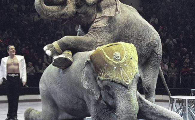 İskoçya, yabani hayvanların bulunduğu sirkleri yasakladı