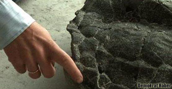 215 milyon yıllık kaplumbağa fosili