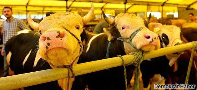 30 hayvan elektrik akımından öldü