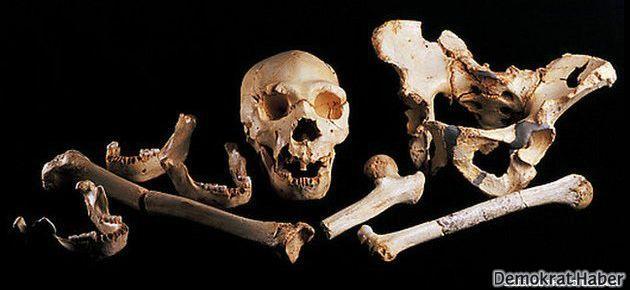 400 bin yıllık insan DNA'sı bulundu
