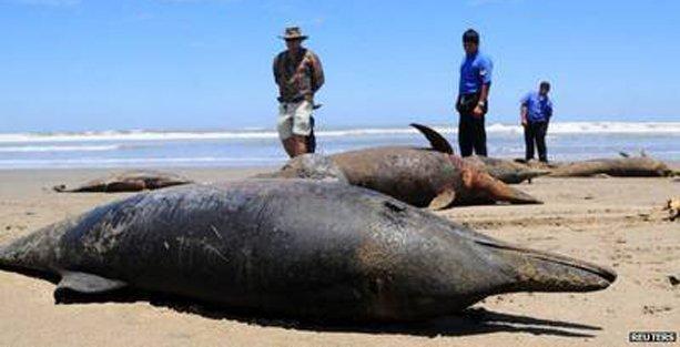 500 deniz aslanı katledildi