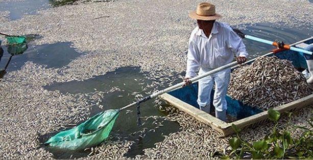 50 ton balık kıyıya vurdu