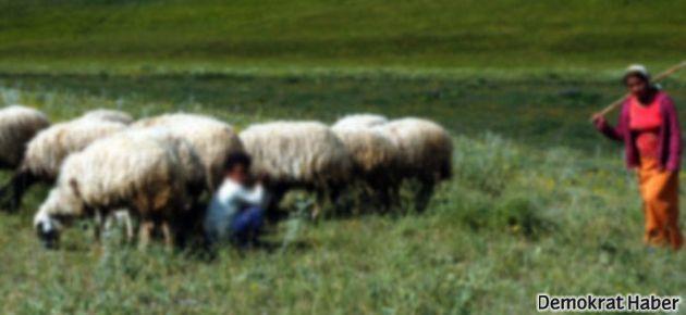 8 koyun için kızını öldürdü